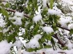 Ձյուն է տեղացել նաև Հայաստանի ամենատաք վայրում