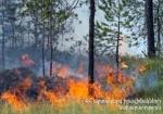 Էջմիածին քաղաքում մոտ 5000 քմ խոտածածկույթ է այրվել