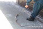Ահազանգեր են ստացվել հանրապետության տարածքում նկատված օձերի վերաբերյալ