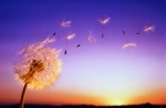 Քամու համաշխարհային օրն է
