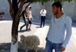 Քաղաքացին ոչխար է բերել կառավարություն (տեսանյութ)