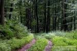 Վարագավան գյուղի բնակիչը գնացել է անտառ և չի վերադարձել
