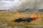 Թալին քաղաքում 20 հա խոտածածկույթ է այրվել